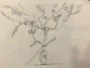 botanical-pencil-sketch